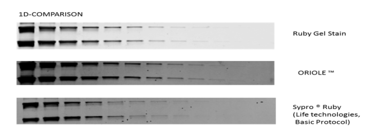 RUBY Gel Stain on 1D gel with its competitors