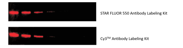 Western Blot with antibody labelled with STAR FLUOR 550 and Cy3™ Antibody Labelling Kit